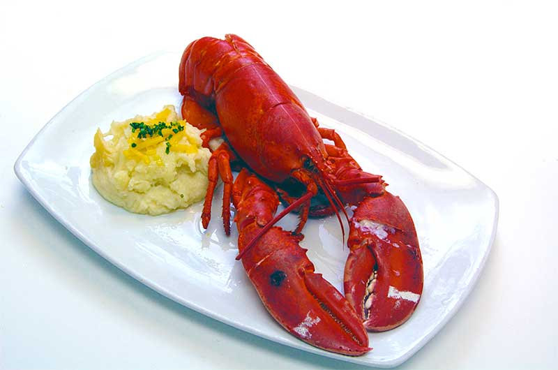 steamed lobster a la Jose Mier