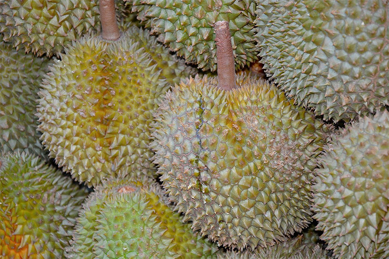 Jose mier gastronomy durian fruit